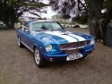 Shelby - american muscle cars