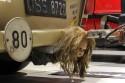 Trabant 601S, hak holowniczy