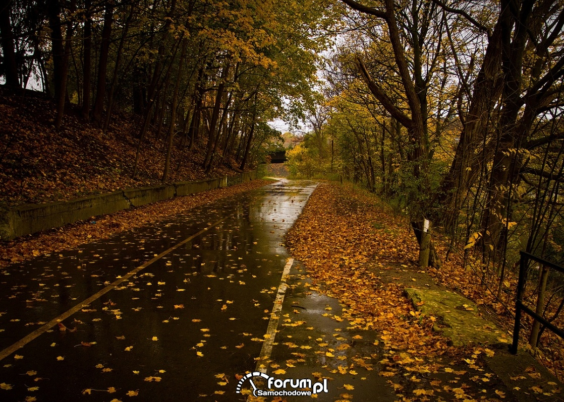 Jesień, droga, liście, mokry asfalt