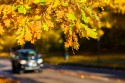 Jesień, liście, samochód