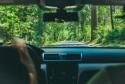 Kierowca, droga przez las, słońce