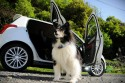 Pies - przerwa w podróży samochodem