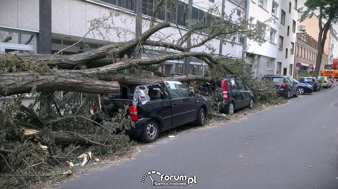 Przewrócone drzewo na zaparkowane samochody, wichura