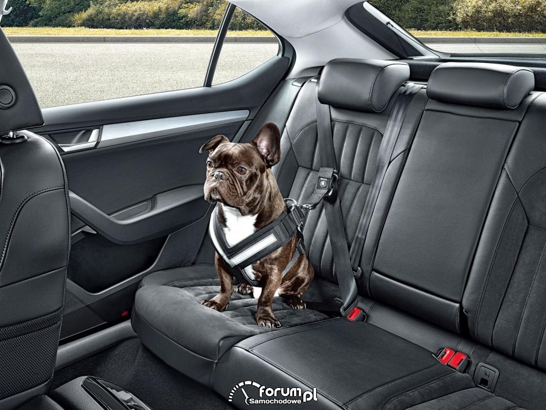 Szelki, pasy dla psa do samochodu