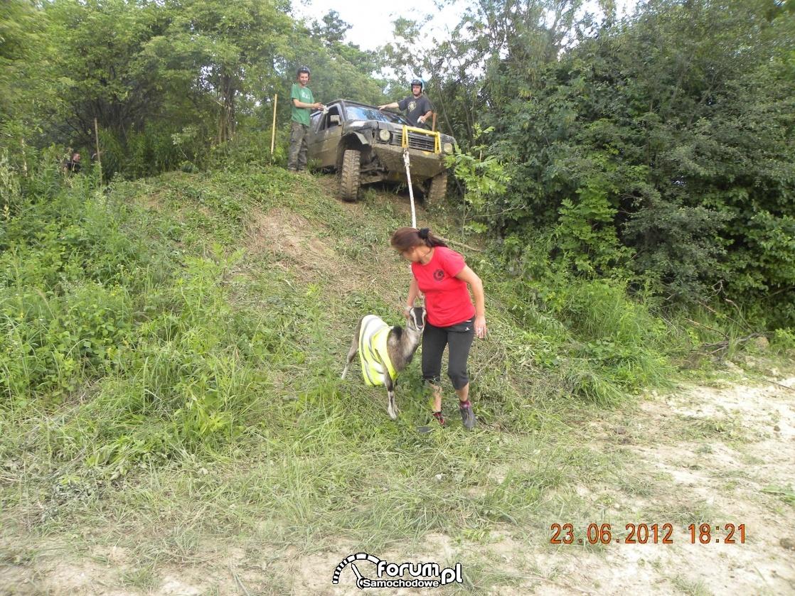 Koza pomaga wyciągnąć zawieszone auto na górce