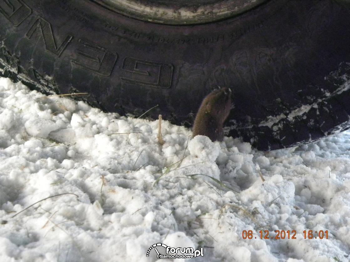 Mała Myszka na Offroadzie
