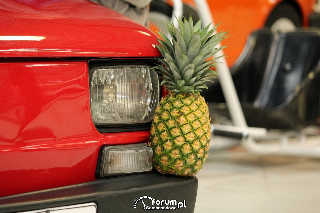 Ananas, Maluch