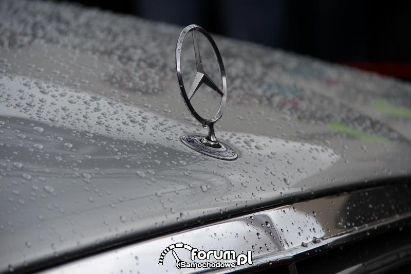 Gwiazda na masce Mercedesa